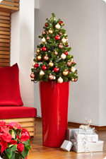 Christmas trees in LECHUZA planters